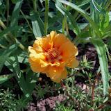 Gardening 2010, Part Two - 101_2585.JPG