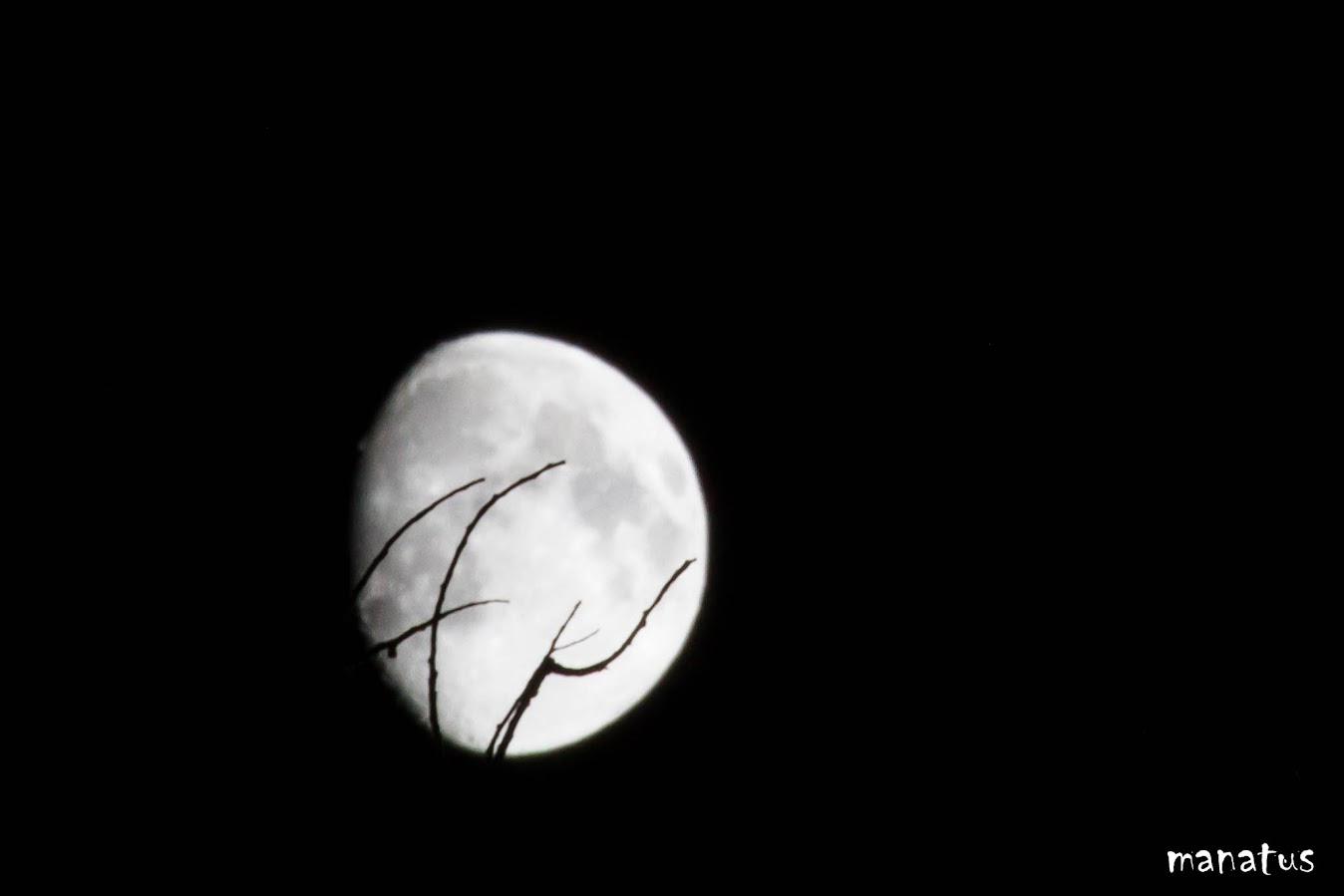 manatus luna ramas