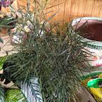 plant171514.jpg