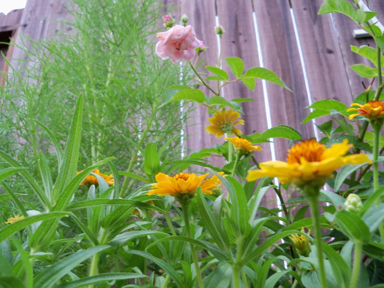 Gardening 2010, Part Two - 101_3215.JPG