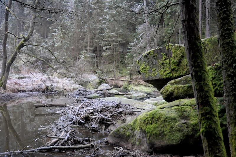 20140101 Neujahrsspaziergang im Waldnaabtal - DSC_9836.JPG