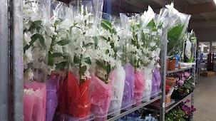 Азалия цветы оптом на азовской, где купить рассаду цветов в нижнем новгороде