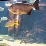 Houston Zoo - 116_8466.JPG
