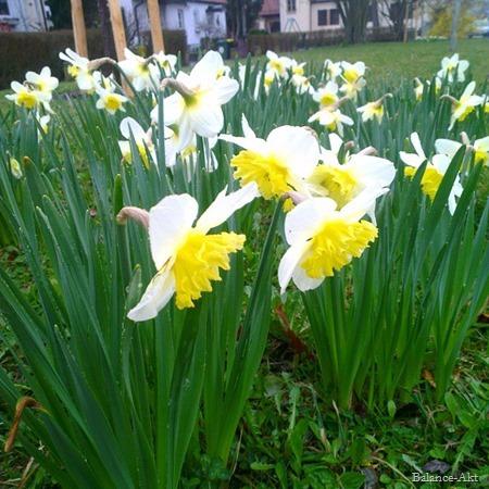 Frühlingsfreuden_5