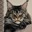 Tashka Z's profile photo