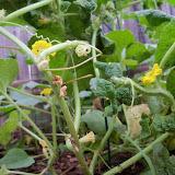 Gardening 2012 - 115_2021.JPG
