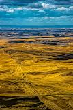 """""""Palouse Gold"""" by Rich Sherman -- 3d Place Print"""