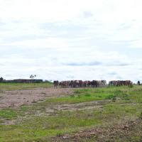 2010-04-15 - 2-3eme safari et retour vers Mombasa