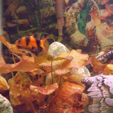 Fish - 116_0197.JPG