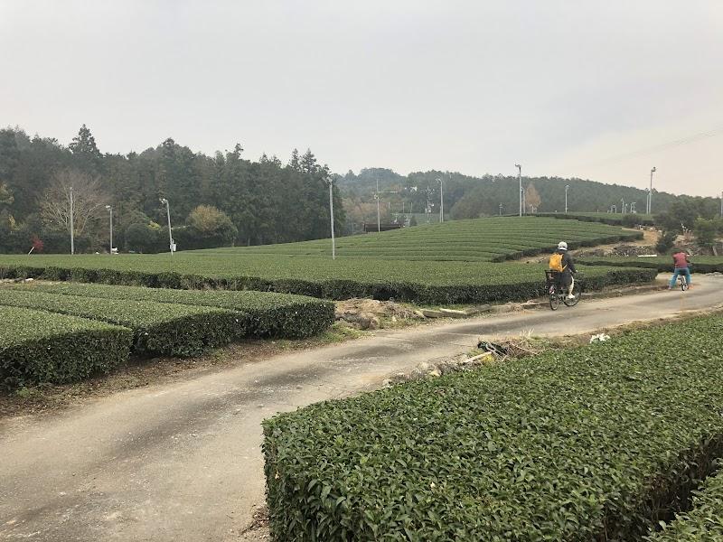 茶畑をみんなでサイクリング
