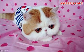 Bộ Hình Nền Dễ Thương Về Các Chú Mèo Con