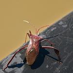 paddlebug.png