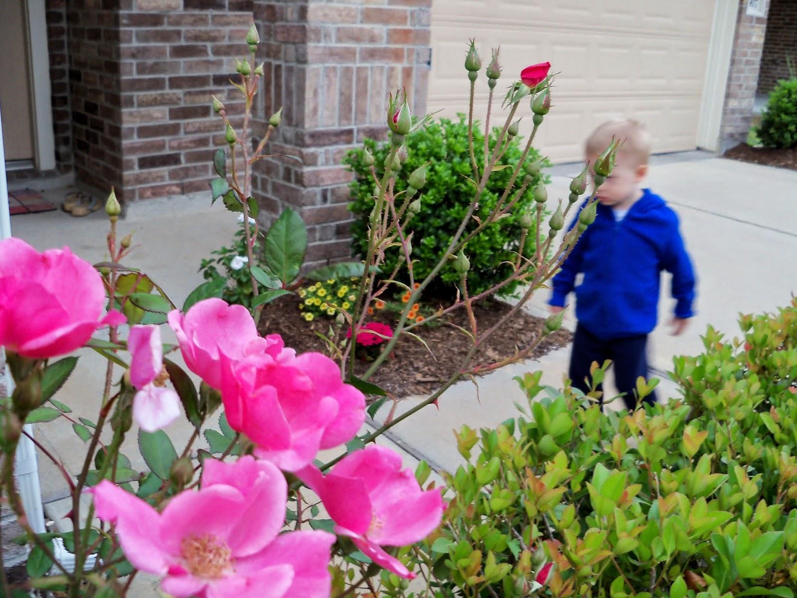 Gardening 2014 - 116_1513.JPG