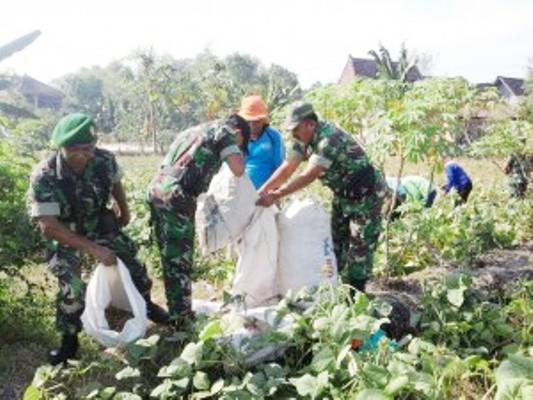 Kodim Ngawi Lakukan pendampingan dan pemahaman bercocok tanam yang benar bagi para petani