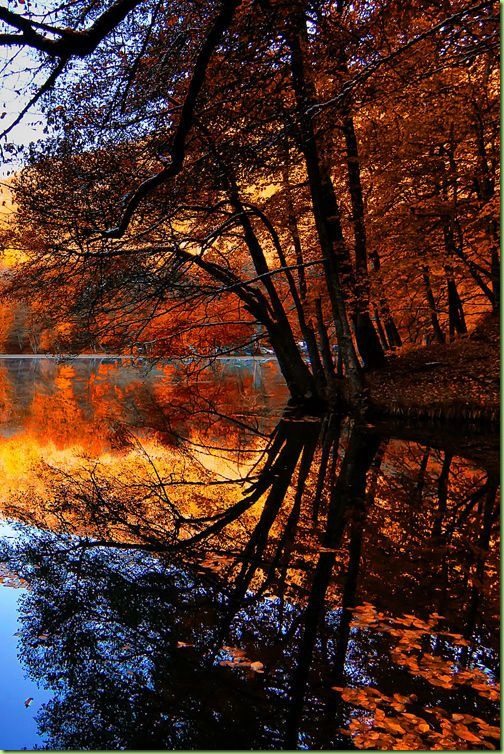 fall autumn water reflections