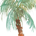 171 Palm Study #2.jpg