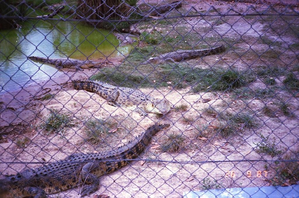 2070NT Croc Farm