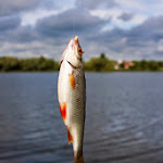 20140603_Fishing_BasivKut_012.jpg