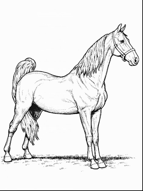 Awesome Horse Jumping Coloring Page With Printable Horse Coloring Regarding  Stylish Horse Jumping Coloring