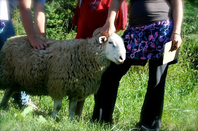 Camp 2010 - sheep%2B%2528Medium%2529.JPG