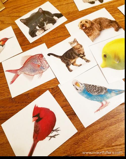 Pet Species Picture Sort