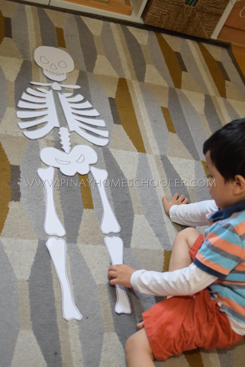 Child Size Skeleton Puzzle