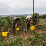 2013 vendanges du chardonnay - 2013%2B09%2B28%2BGuimbelot%2Bvendanges%2Bdu%2BChardonnay%2B126.jpg