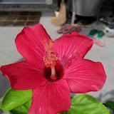 Gardening 2010, Part Three - 101_4964.JPG