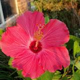 Gardening 2012 - 115_1893.JPG