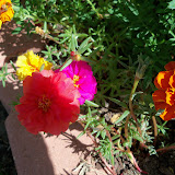Gardening 2010, Part Three - 101_3686.JPG