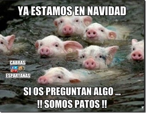 humor-cerdos-navidad