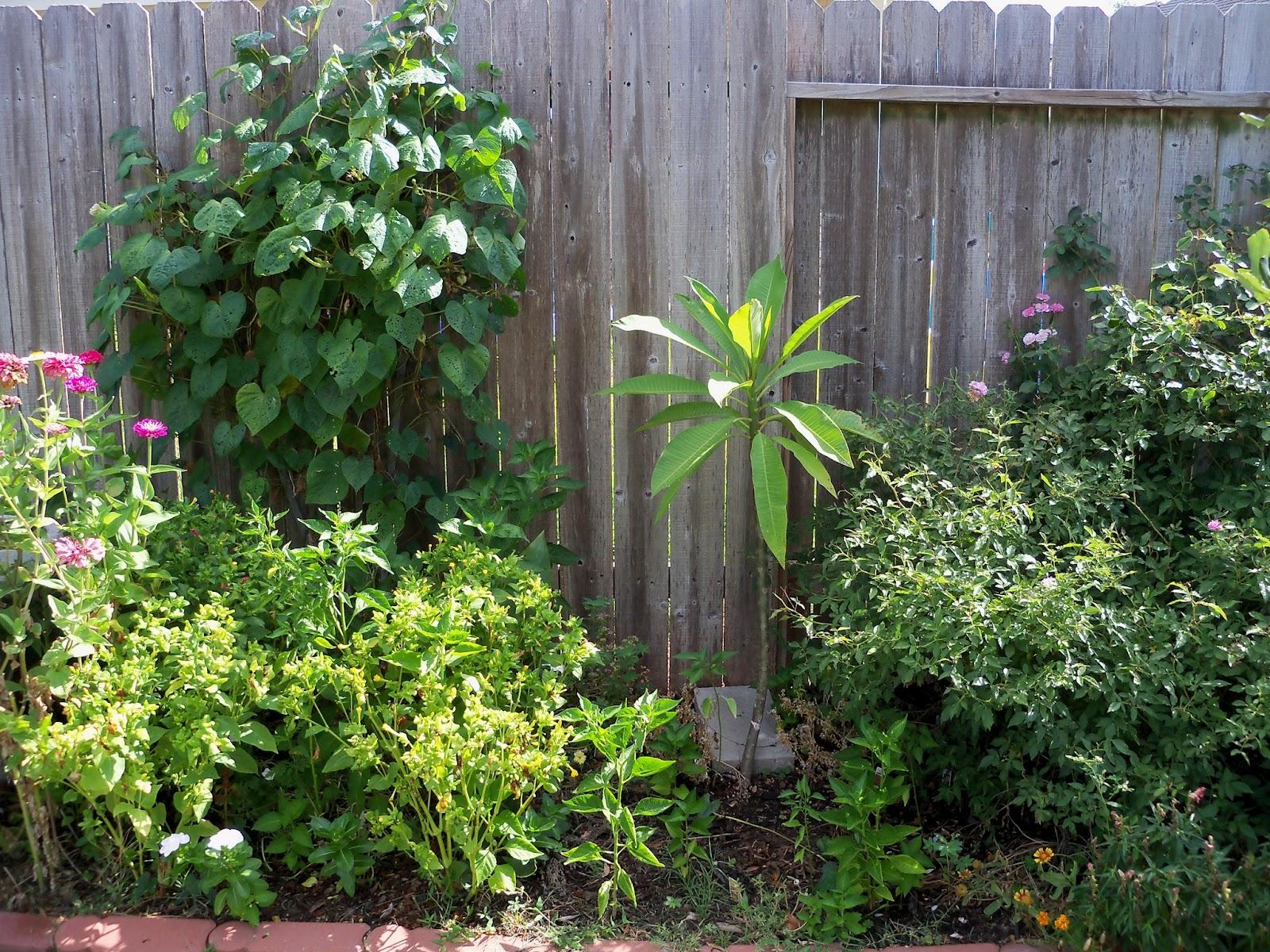 Gardening 2011 - 100_9942.JPG