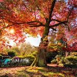 Luke Zeme