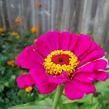 Gardening 2011 - 100_8824.JPG