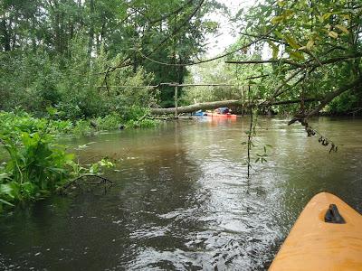 Ekologiczny mostek