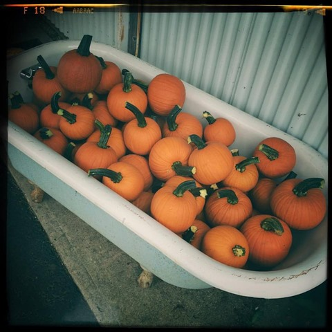 pumpkins in a tub