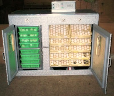 incubator5.jpg