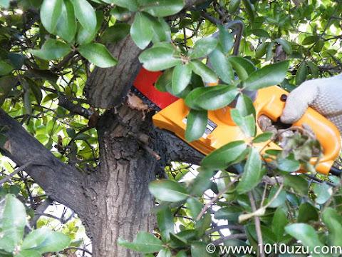 大きい枝もすいすい切れる