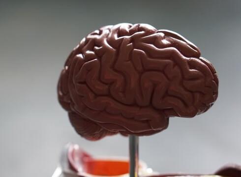 nosso cerebro é grande