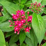 Gardening 2014 - 116_1820.JPG