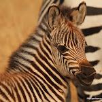 Kenia Maasai Mara