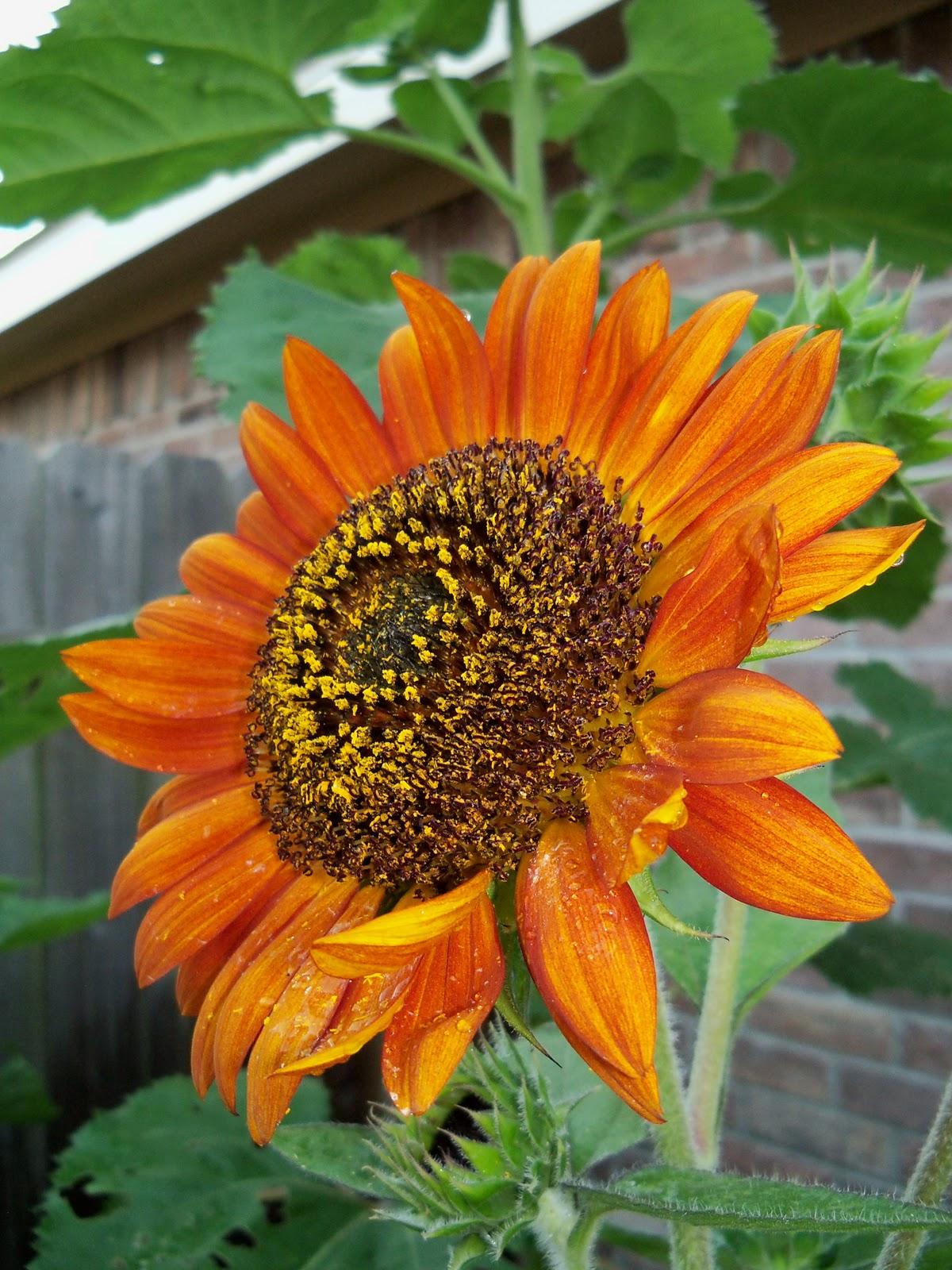 Gardening 2010, Part Three - 101_3989.JPG
