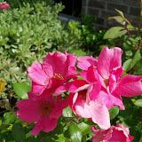 Gardening 2012 - 115_1708.JPG