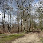 Forêt de Montmorency : Route de la Croix Saint-Jacques