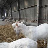 Bevers en Welpen- Lammetjes kijken - SAM_2409.JPG