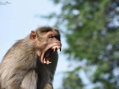 Monkey Business : Model bisnis yang memanipulasi harga dengan stock