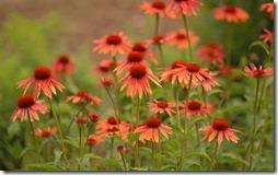 margaritas flores (54)