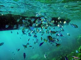 explore-pulau-pramuka-olp-15-16-06-2013-01