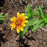 Gardening 2010, Part Two - 101_3516.JPG