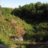 Вид на Экологическую тропу с транзитной дорожки с улицы Гайдара на Пушкарскую